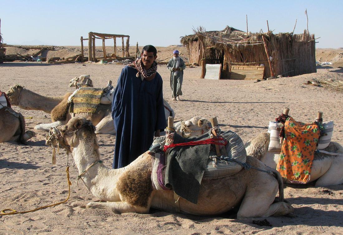 Хургада, сафари, верблюды