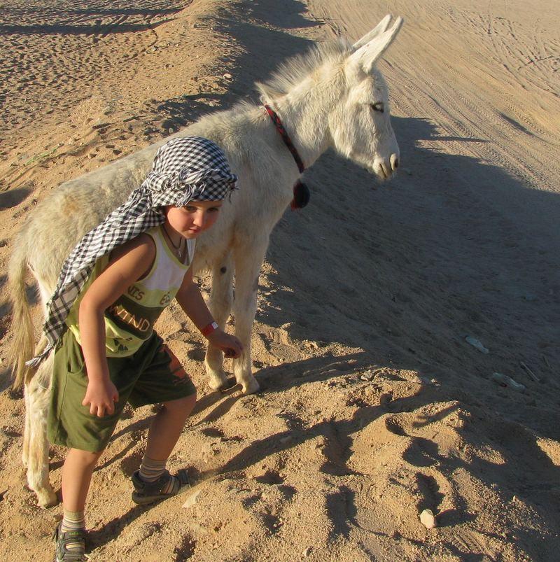 Хургада, мальчик и ослик