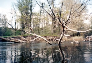 Река Ворона, Тамбовская область, коряги