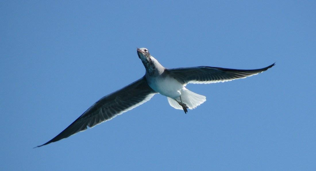 Хургада, морская прогулка, чайка