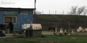 Парк птиц в Мраморном