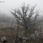 Чатыр-Даг. Туман. Ершистое дерево.