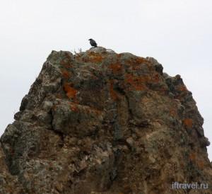 Птица Рок