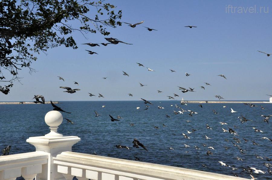 День 9: Севастополь, птички