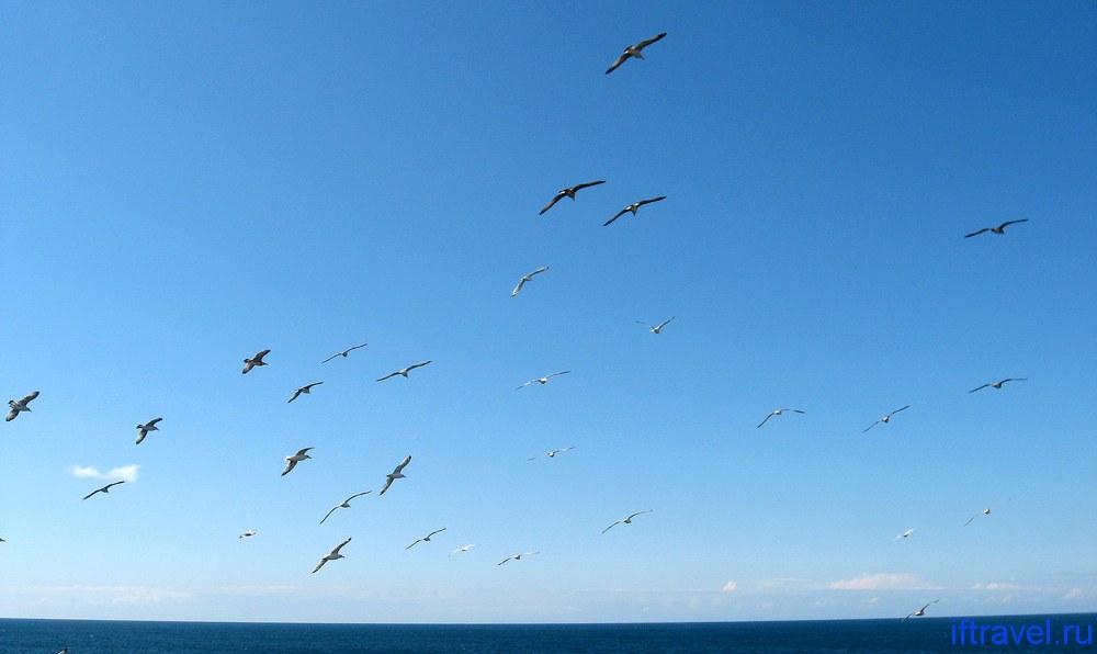Чайки в Черноморском