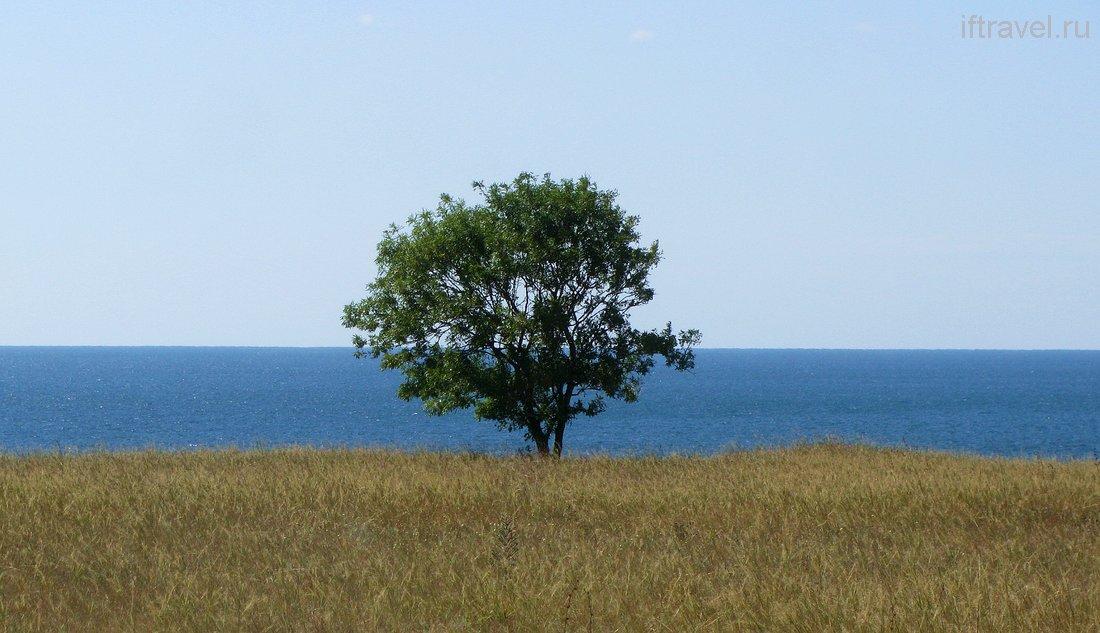 Дерево на берегу, Черноморское