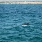 Море в пос. Мирном, дельфин