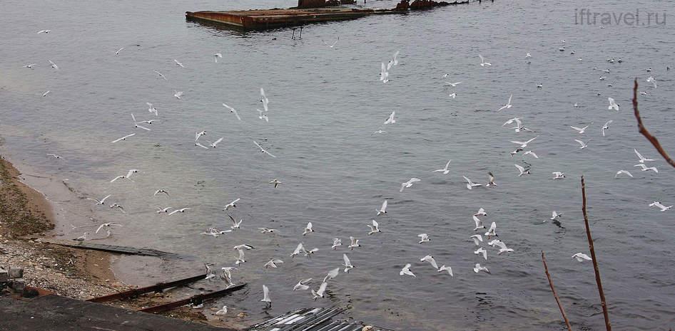 Птицы водят хоровод