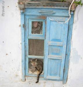 Кошка в окошке