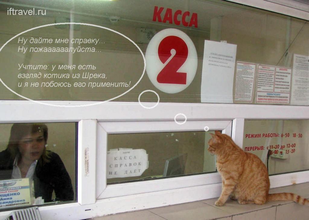 Новороссийск: кот у кассы