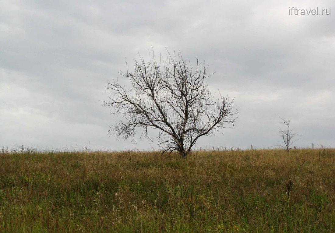 Лиски-Переезжее, сухое дерево