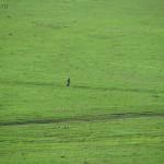 Мужик на зеленом ковре
