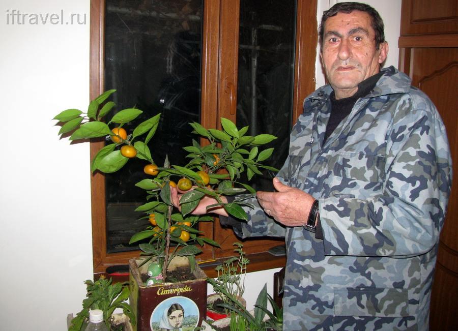 Дядя Феликс и его мандарины
