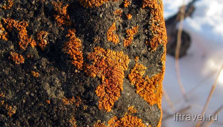 Теплый камень в лишайниках