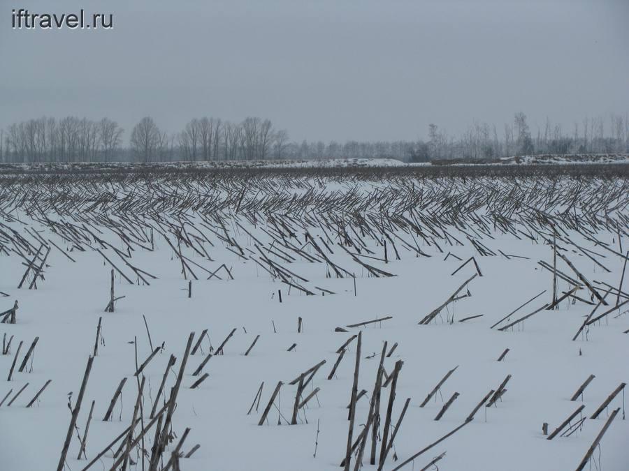 Татарский вал в подсолнухах