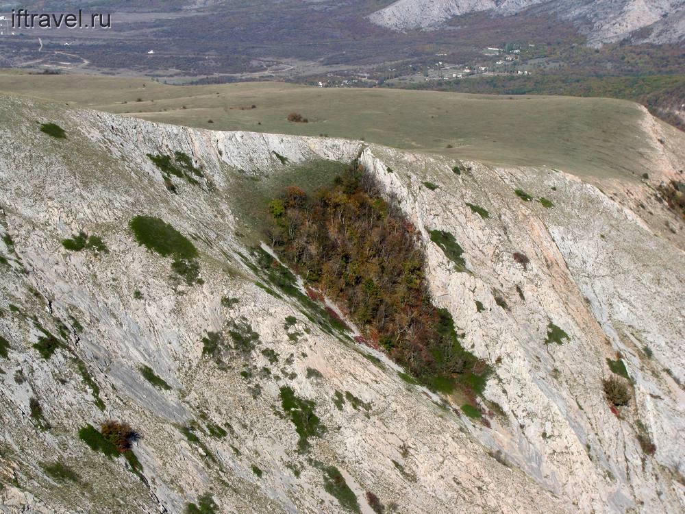 Лес карабкается на склоны