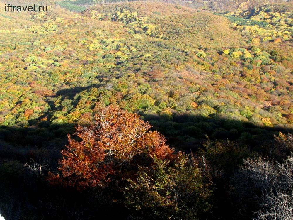 Лесной ковер на склонах Чатыр-Дага