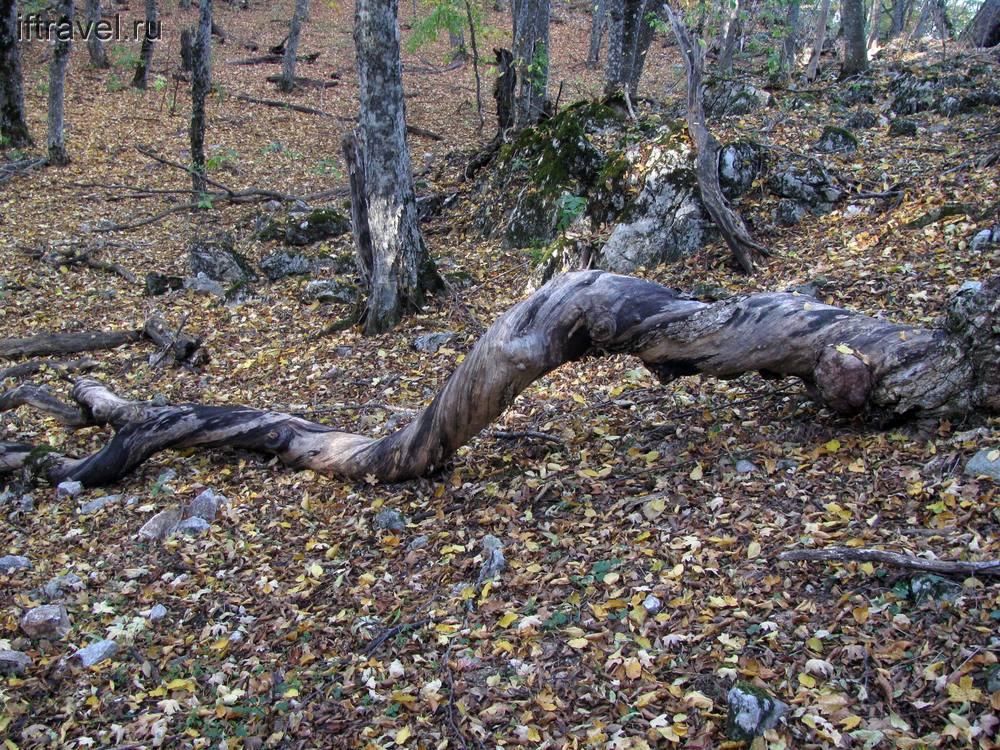 Крученое дерево