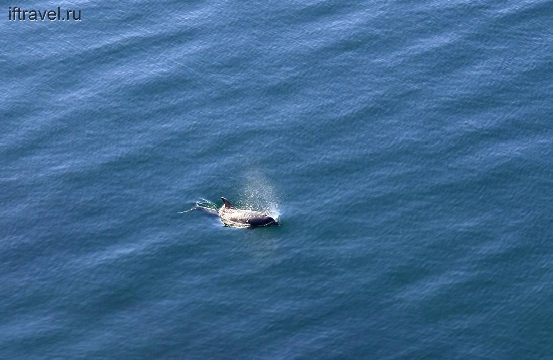 Дельфин на подходе