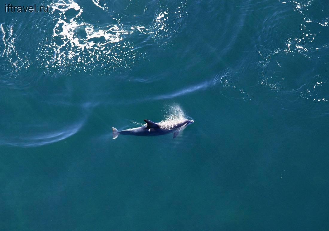 Дельфин в брызгах