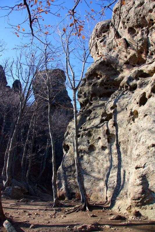 Деревья у подножья сырных скал