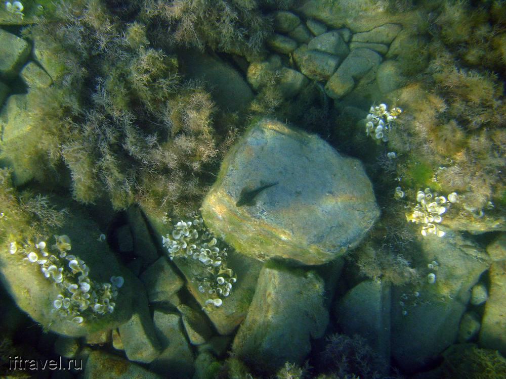 Рыбка на камне