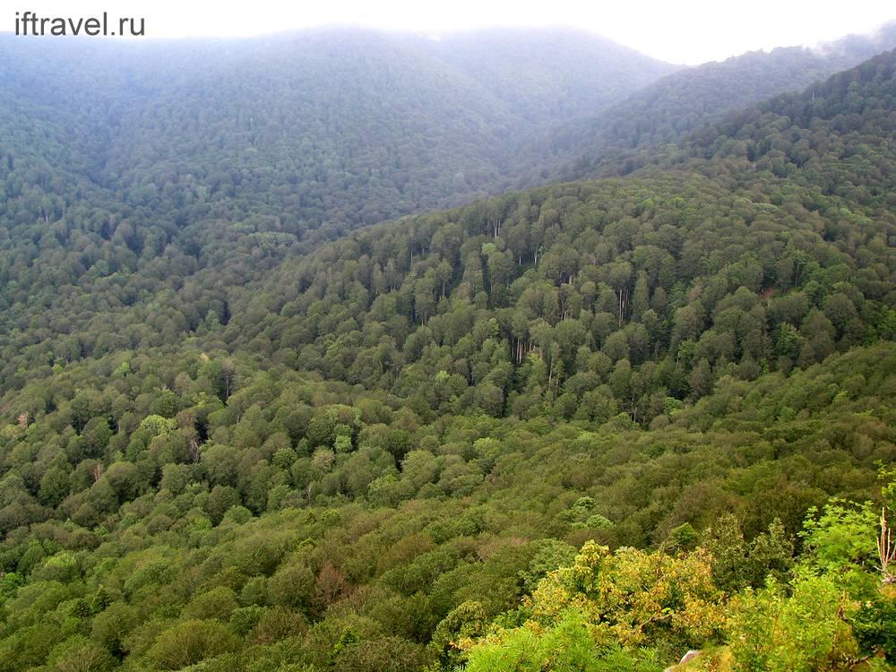Внизу расстилался лес