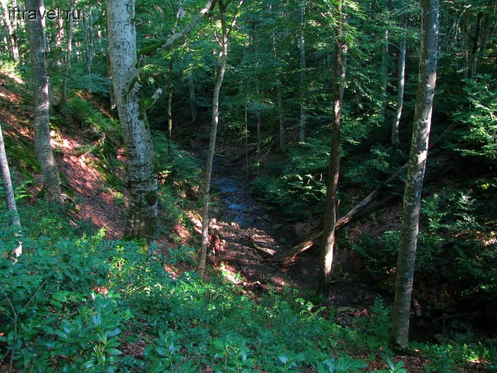 Чудесный лес