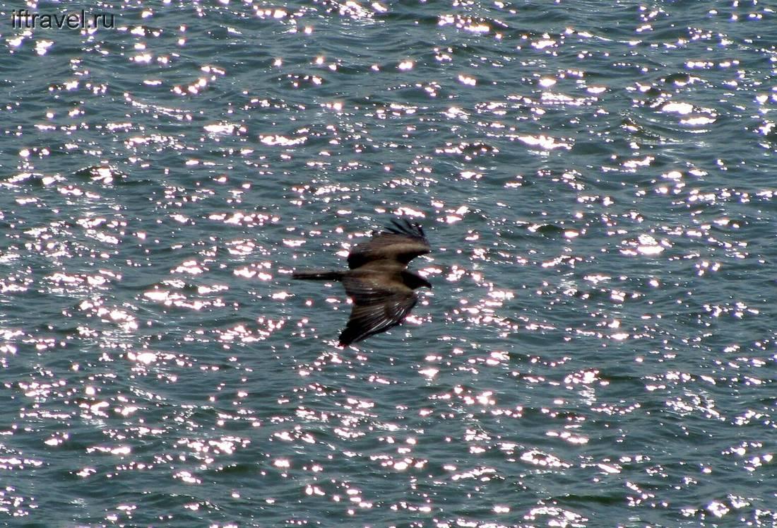 Птичка над водами Иртыша