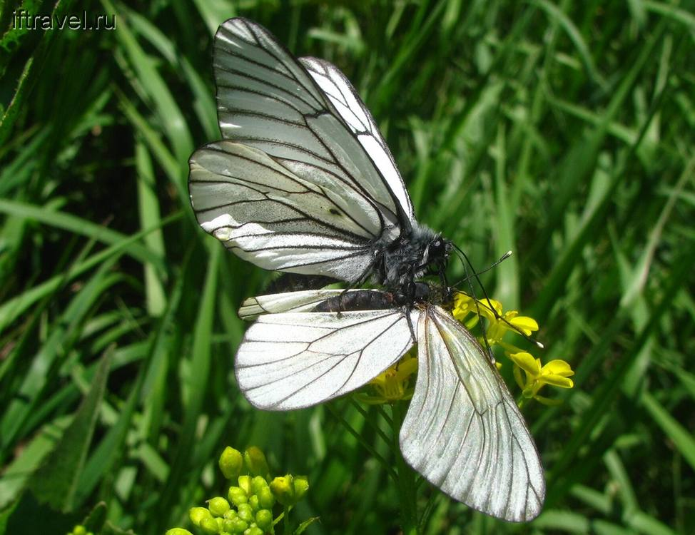 Бабочки в процессе