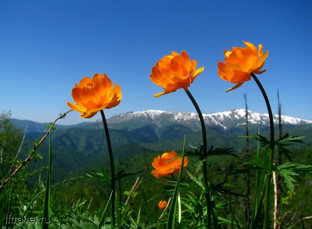 Цветы (жарки)