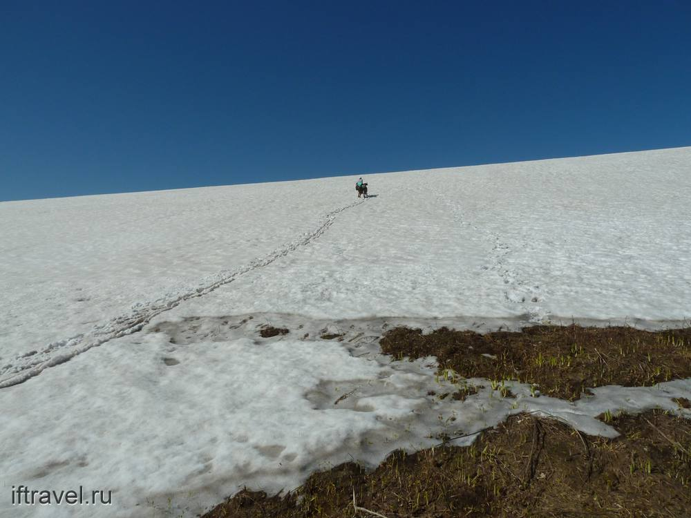 Феерический снежник