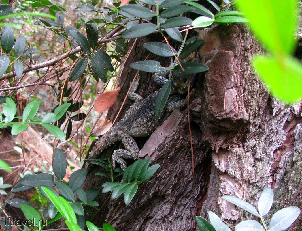 Небольшой древесный крокодильчик