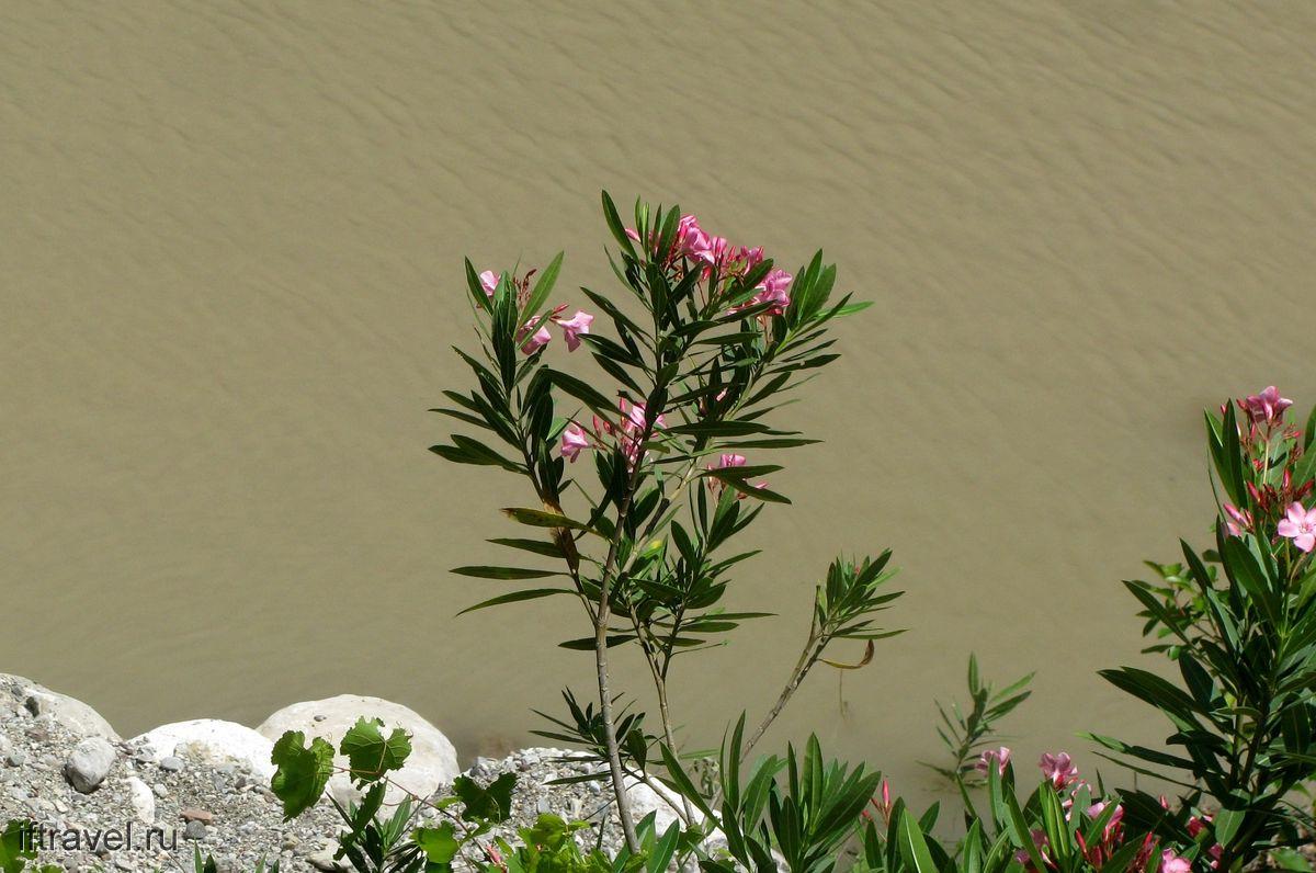 Гейнюкский каньон, цветы и муть