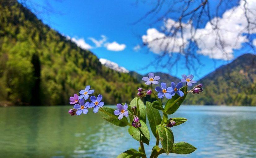 Цветочки на фоне оз. Рица